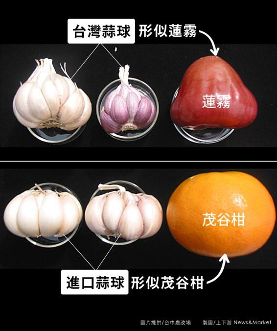 蒜球區別:台灣似